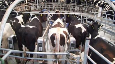 Impacto del COVID-19 en la lechería a nivel global