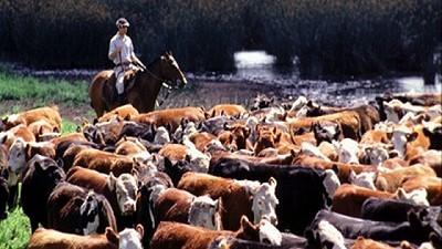 Los márgenes ganaderos con exportaciones restringidas