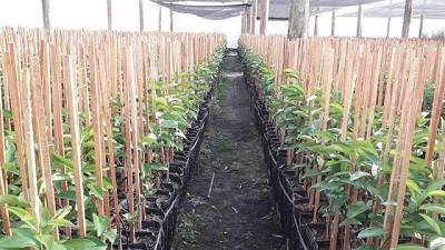 Fertilizantes de liberación controlada, para un trasplante que asegure la salud del cultivo