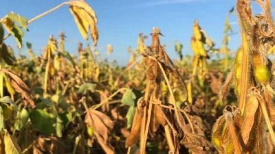 Santiago del Estero - 1 millón de hectáreas cosechadas de soja y continúa la actividad para maíz y sorgo -Campaña 2020/21