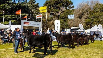La Exposición Nacional Angus de Primavera se realizará en octubre en Tandil