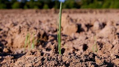 ¿Cómo avanzar a una agricultura más sostenible en América Latina?