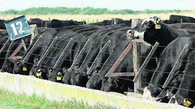 """Ferrés: """"Creo que Uruguay va a seguir creciendo en ganado terminado a corral"""""""