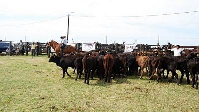 Este viernes Rosgan vuelve a la Sociedad Rural Argentina con un remate de casi 10.000 cabezas