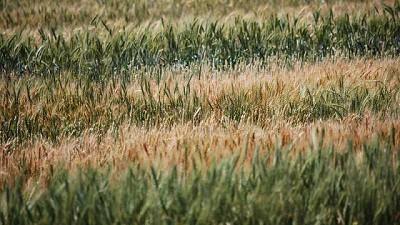El agro argentino puede ser parte de la solución al cambio climático