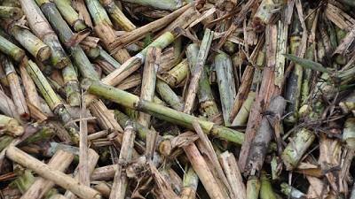 En el norte, la biomasa es una oportunidad para el desarrollo sustentable