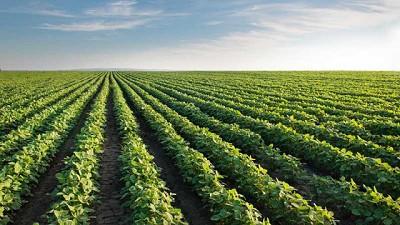 Planificar para anticipar: 8 consejos para obtener alto rendimiento en el cultivo de soja