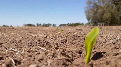 Ya se sembró más de la mitad del maíz, pero empieza a faltar agua en la cama de siembra