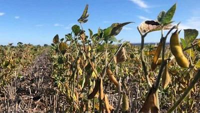 La demanda mundial de soja sigue creciendo frente a una nueva realidad
