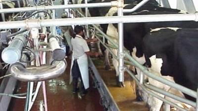 El ministro Rodríguez destacó el crecimiento de la producción lechera bonaerense
