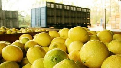 Argentina exporta 72.981 toneladas de limones a Estados Unidos en 2021 e impulsa nuevos mercados