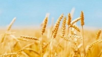 La llave de la producción de alimentos, por Fabián Quiroga