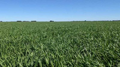 Heladas sobre el centro y sur del área agrícola podrían comprometer la producción de los cereales de invierno