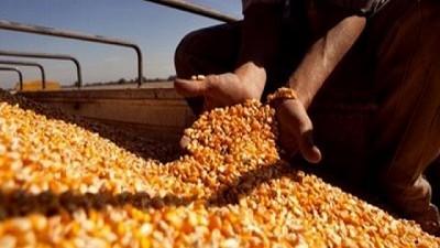 El Gobierno puso nuevas trabas a las exportaciones de maíz y hay quejas de los productores