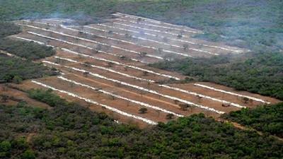 Fondo Verde del Clima donó u$s 82 millones para combatir la deforestación en Argentina