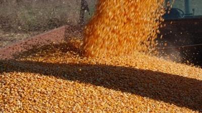 Las exportaciones de maíz están abiertas: La Argentina va a exportar un récord histórico de 38,5 millones de toneladas