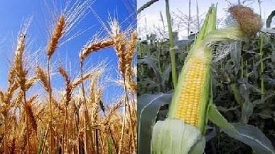 Mayores existencias mundiales de soja y maíz quitan presión a los precios
