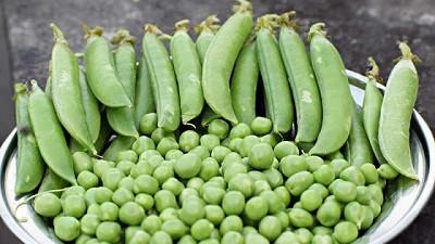Arvejas: las proteínas vegetales que ganan terreno
