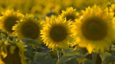 Intención de siembra de cultivos estivales 2021/22: Córdoba, Santiago del Estero y San Luis