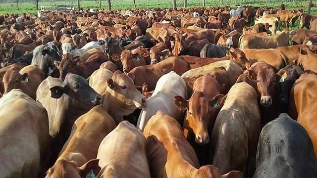 Resultado de imagen de cabezas de ganado